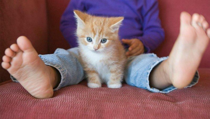 punya kucing dan balita dirumah cek dulu 4 hal berikut ini ya moms 3