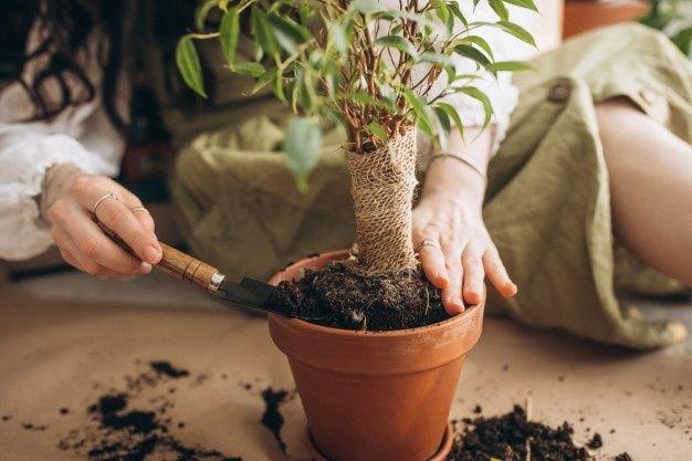 pupuk untuk tanaman indoor.jpg