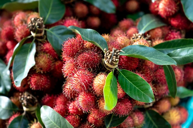rambutan, buah yang perlu dihindari saat balita batuk.jpg