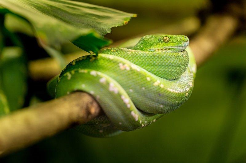 snake-1634293_960_720.jpg