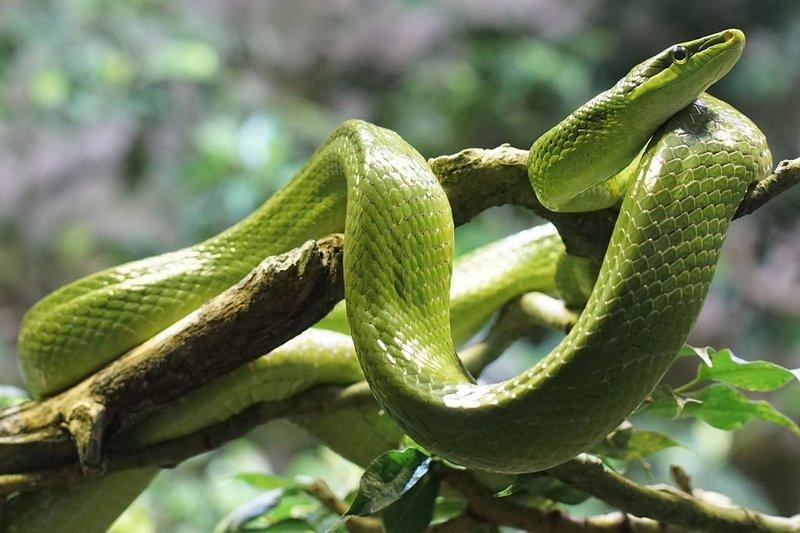 snake-861713_960_720.jpg