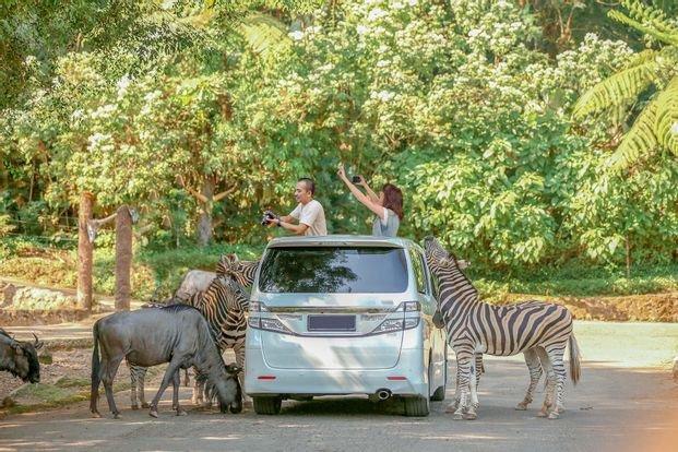 taman safari.jpg