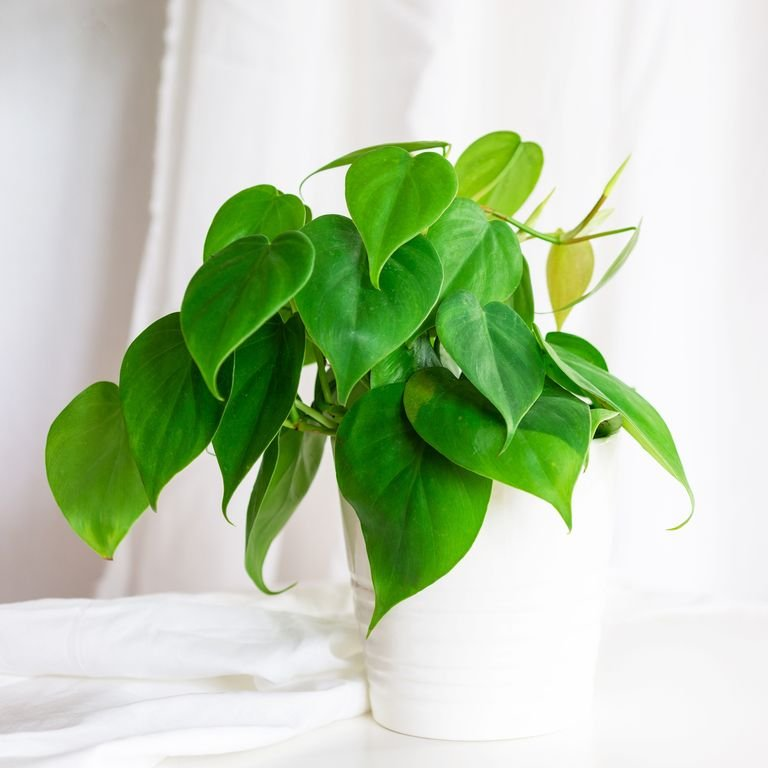 tanaman hias untuk ruangan tertutup