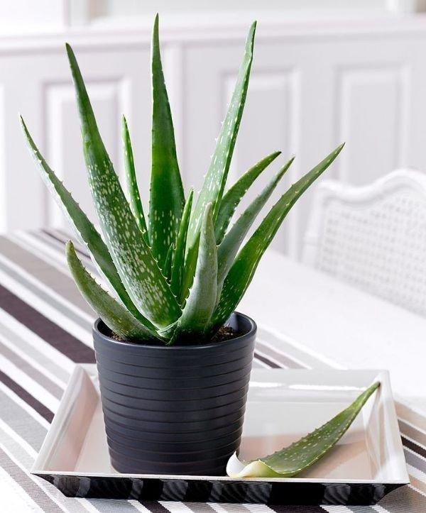 tanaman yang bisa hidup tanpa sinar matahari