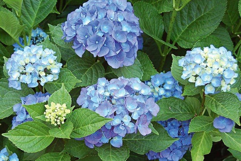 tanaman hias bunga 2.jpg