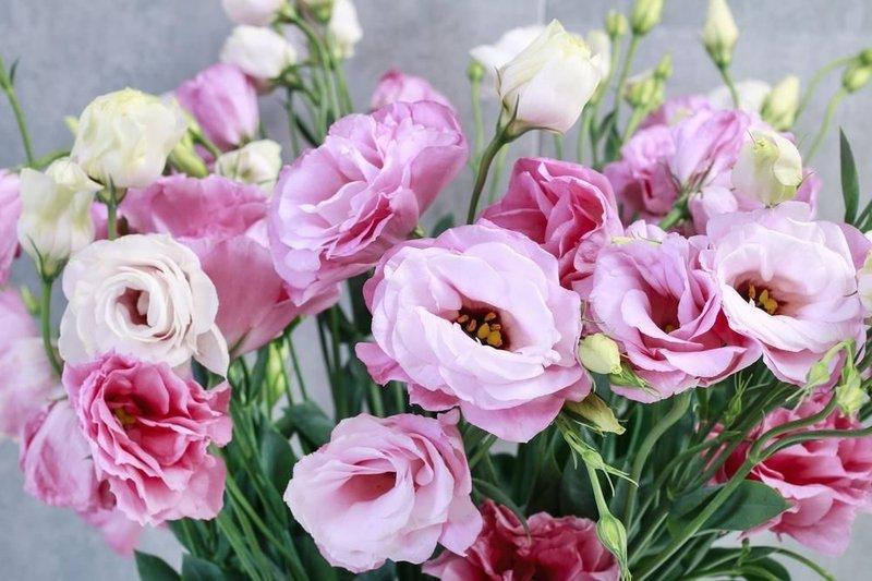 tanaman hias bunga 4.jpg