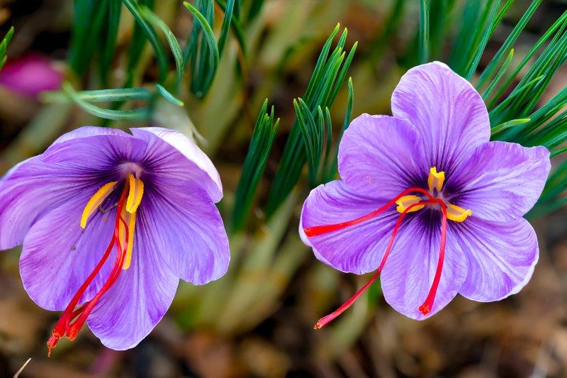 10 Tanaman Hias Bunga yang Bikin Rumah Makin Cantik