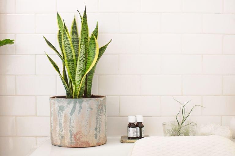 tanaman hias untuk kamar mandi