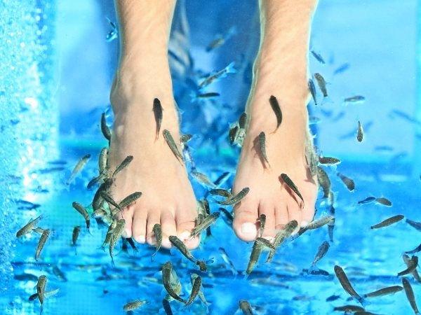 terapi ikan nilem.jpg