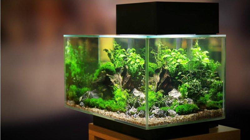 ukuran akuarium