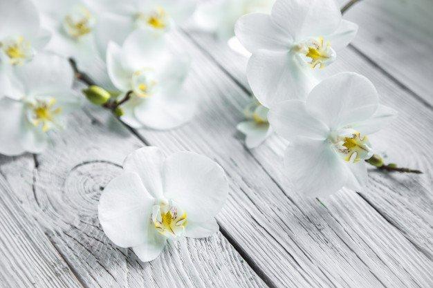 Bunga anggrek memiliki kandungan antioksidan