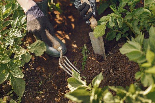 manfaat cacing tanah untuk tanaman