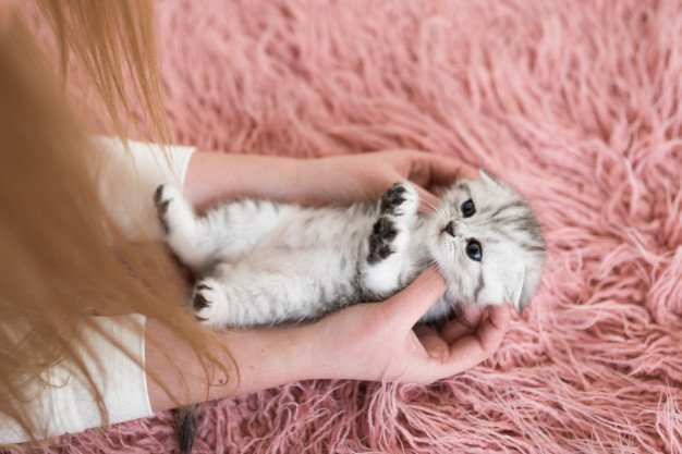 Anak kucing perlu diajak bersendawa