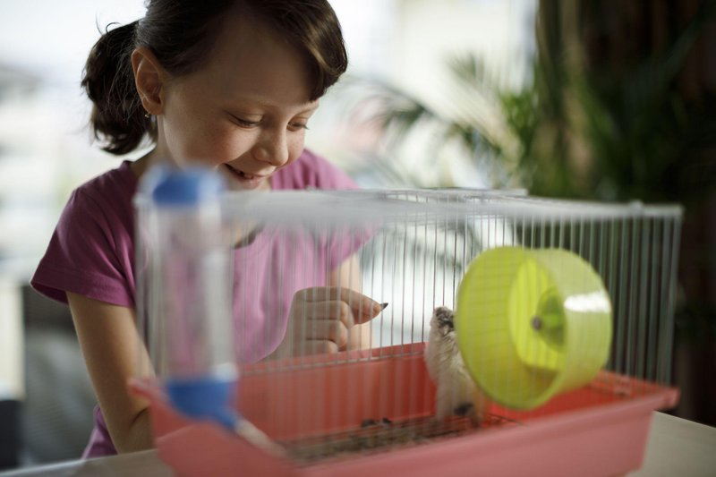 younggirlfeedingmouse gettyimages 670136476 5c32cf1246e0fb000191678f