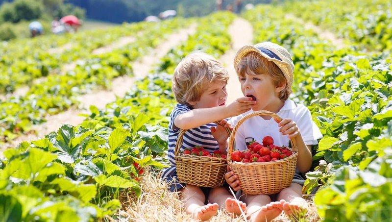 yummy! ini dia manfaat strawberry untuk balita 4